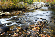 Cranberry Photo Prints - Autumn along Cranberry River Print by Thomas R Fletcher