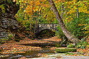 Colorful Bark Photos - Autumn Bridge by Robert Harmon