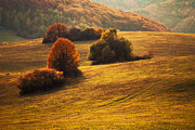 Martin Smolak - Autumn colors