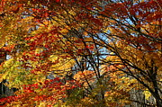 Fall Photos Prints - Autumn Colors Print by Neal  Eslinger