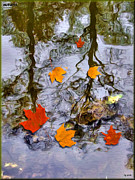 Autumn Leaf On Water Digital Art Posters - Autumn Poster by Daniel Janda