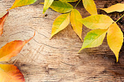 Mythja  Photography - Autumn forest background