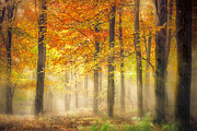 Woodland Scene Prints - Autumn Gold Print by Ian Hufton