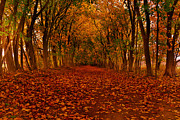 Raymond Salani III - Autumn II
