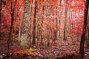 Autumn Landscape Print by Kim Fearheiley