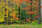 Amazing Prints - Autumn Landscape Print by Robert Harmon
