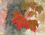 Multi Colored Art - Autumn Leaves by Angie Vogel