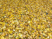 Autumn Leaves Print by Michal Boubin
