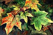Sycamore Paintings - Autumn Leaves by Paul Dene Marlor