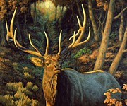 Elk Paintings - Autumn Majesty by Crista Forest