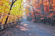 Fairmount Park Prints - Autumn on Forbidden Drive Print by Bill Cannon