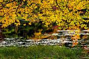 Autumn Pond Print by Bill  Wakeley