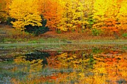 Image Prints - Autumn Reflection Print by Terri Gostola