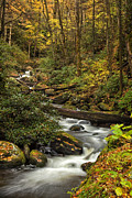 Autumn Woods Posters - Autumn Stream Poster by Andrew Soundarajan