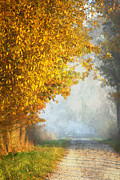 Autumn Landscape Digital Art - Autumn Tree by Jana Behr