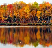 Reflection Prints - Autumn Water Colors Print by Terri Gostola