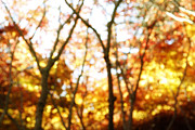 Element Photos - Autumnal forest by Les Cunliffe