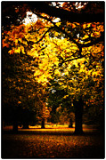 Lenny Carter Framed Prints - Autumnal Walks Framed Print by Lenny Carter