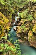 Adam Jewell - Avalanche Creek