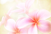 Hawaiian Plumeria Art - Awakening Love by Sharon Mau