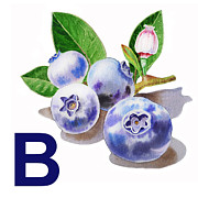 Blueberry Paintings - B Art Alphabet for Kids Room by Irina Sztukowski