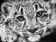 Black Leopard Prints - Baby Snow Leopard Print by Sharlena Wood