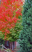 Photos Of Autumn Photos - Back Door by Skip Willits