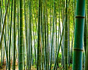 Bamboo Forest Framed Prints - Bamboo Forest Framed Print by Alexander Snay