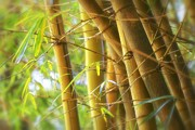 Asian Landscape Posters - Bamboo Gold Poster by Jade Moon