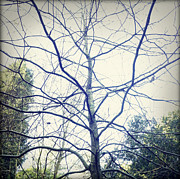 Woodland Photo Posters - Bare tree Poster by Les Cunliffe