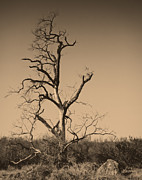 San Pasqual Prints - Barren Print by Dave Hall