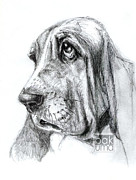 Bakhtiar Umataliev - Basset hound