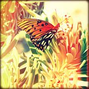 Florida Flowers Framed Prints - Beach Butterfly I Framed Print by Chris Andruskiewicz