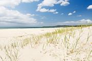 Tim Hester - Beach Grass