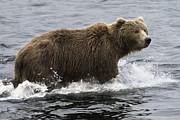Tim Moore - Bear Alert