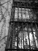 Window Bars Prints - Beautiful Imprisonment Print by Anastasia Gregg