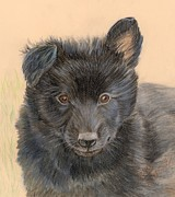Ruth Seal - Belgian Sheepdog Puppy