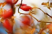 Floral Photographs Photo Originals - Berry by Maurizio Grandi