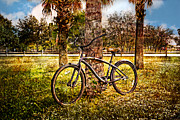 Sunset Scenes. Prints - Bicycle in the Park Print by Debra and Dave Vanderlaan