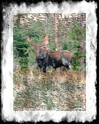 Engraving Mixed Media - Big Bull Moose by Barbara Griffin