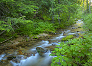 North Idaho Prints - Big Creek Print by Idaho Scenic Images Linda Lantzy
