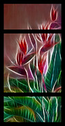 Lines Of Energy Framed Prints - Bird of Paradise Fractal Framed Print by Peter Piatt