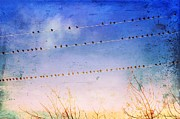 Anne Thurston - Birds on Wires