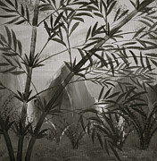 Mark Beach - Black Bamboo