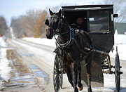 Horse And Buggy Framed Prints - Black Beauty Framed Print by Linda Mishler