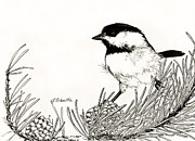Chickadee Drawings Prints - Black Capped Chickadee Print by Sandra Schultz
