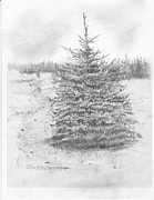Dakota Drawings - Black Hills Spruce by Jim Hubbard