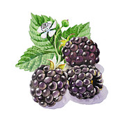 Black Berries Framed Prints - Blackberries Framed Print by Irina Sztukowski