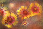 Fall Colors Autumn Colors Posters - Blanket Flowers Poster by Angie Vogel