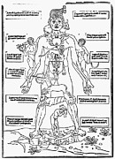 1493 Photos - Bloodletting Chart, 1493 by Granger